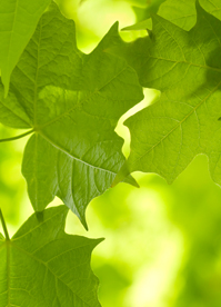 GreenHome_Leaves